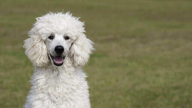 マヤ暦KIN10、白い犬・赤い龍・音10