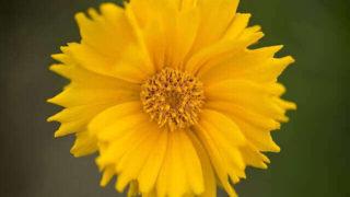 マヤ暦KIN100、黄色い太陽・黄色い人・音9