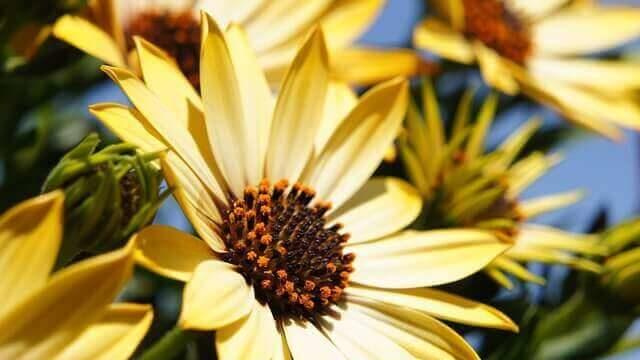 マヤ暦KIN104、黄色い種・黄色い人・音13