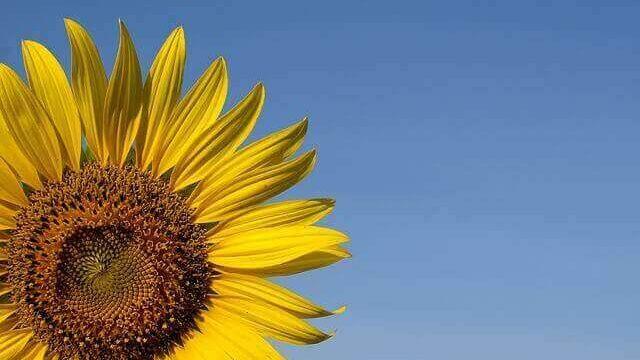 マヤ暦KIN20、黄色い太陽・白い魔法使い・音7