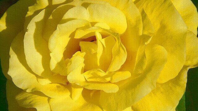 マヤ暦KIN4、黄色い種・赤い龍・音4