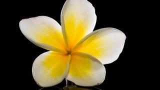 マヤ暦KIN42、白い風・黄色い太陽・音3