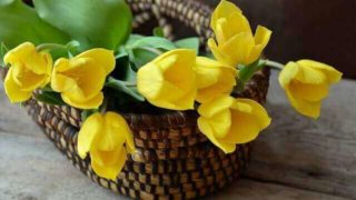 マヤ暦KIN48、黄色い星・黄色い太陽・音9