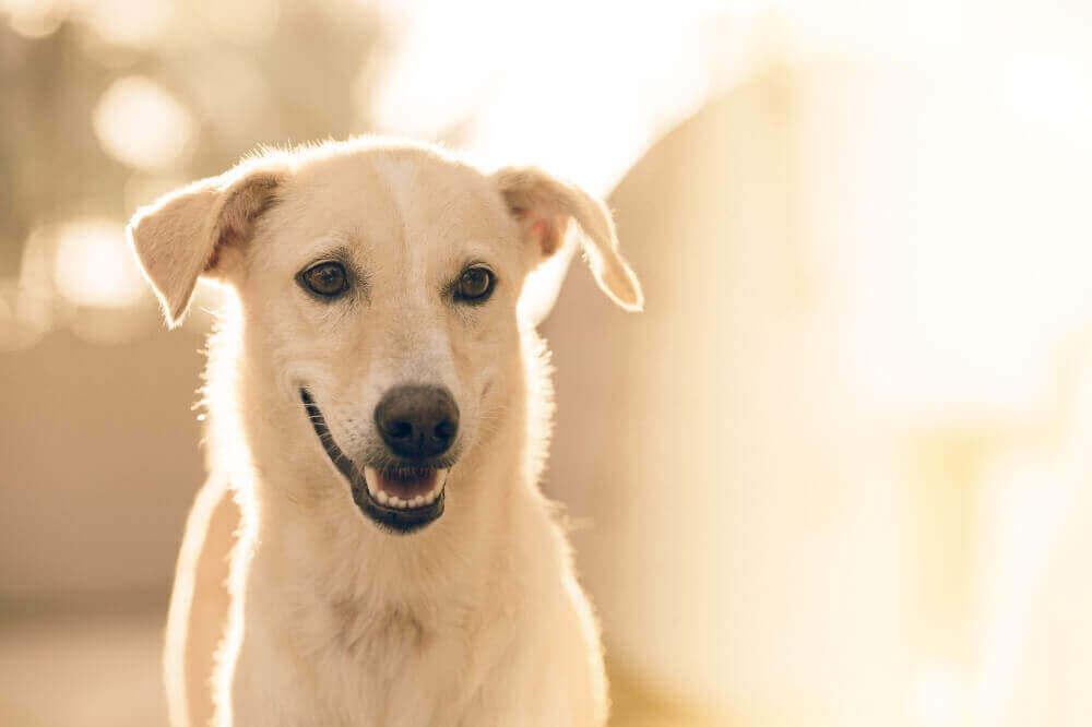 マヤ暦KIN50、白い犬・黄色い太陽・音11