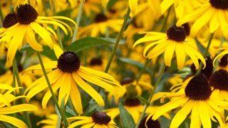 マヤ暦KIN60、黄色い太陽・赤い空歩く人・音8