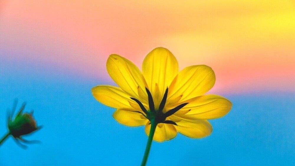 マヤ暦KIN84、黄色い種・青い嵐・音6