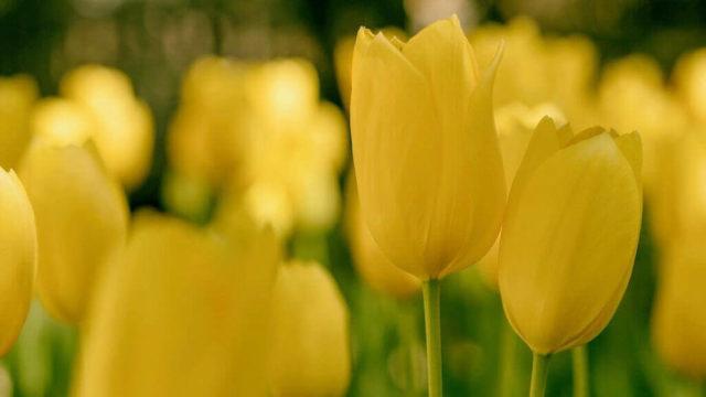 マヤ暦KIN88、黄色い星・青い嵐・音10