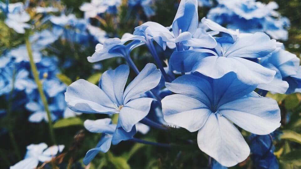 マヤ暦KIN91、青い猿・青い嵐・音13