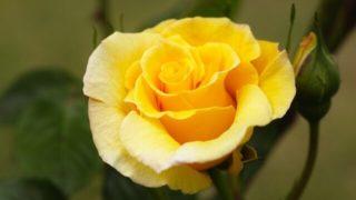 マヤ暦KIN108、黄色い星・赤い蛇・音4