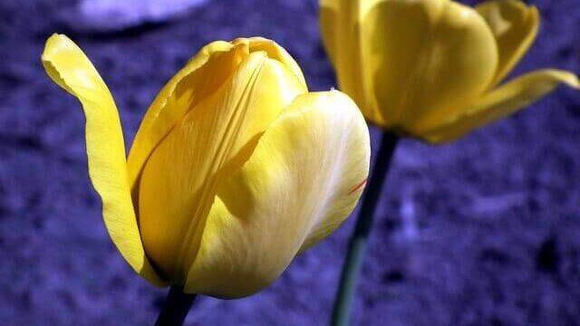 マヤ暦KIN120、黄色い太陽・白い鏡・音3