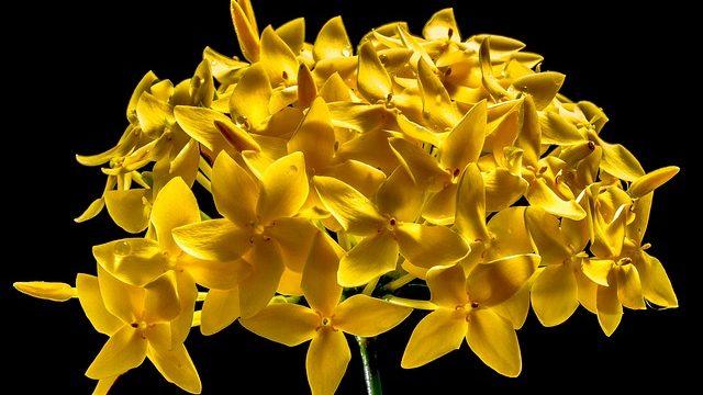マヤ暦KIN128、黄色い星・白い鏡・音11