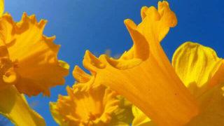 マヤ暦KIN132、黄色い人・青い猿・音2