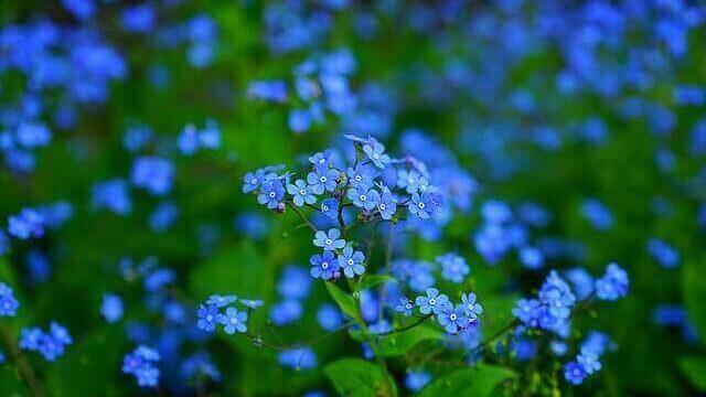 マヤ暦KIN135、青い鷲・青い猿・音5