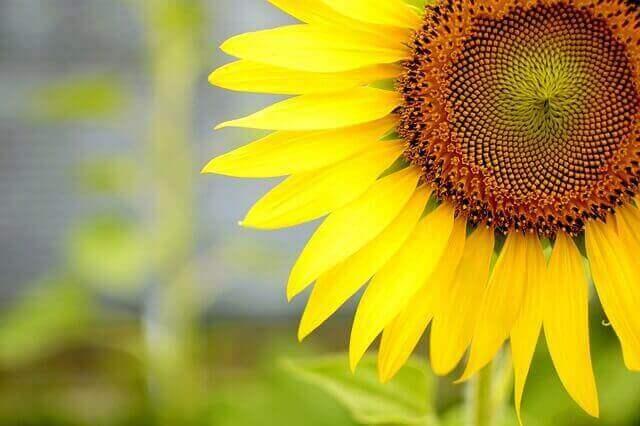 マヤ暦KIN140、黄色い太陽・青い猿・音10