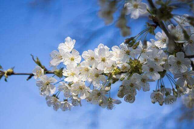マヤ暦KIN142、白い風・青い猿・音12
