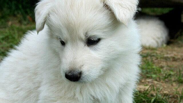 マヤ暦KIN130、白い犬・白い鏡・音13