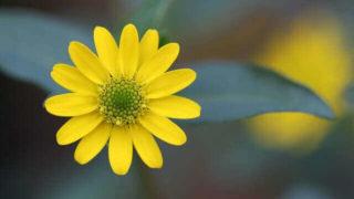 マヤ暦KIN144、黄色い種・黄色い種・音1