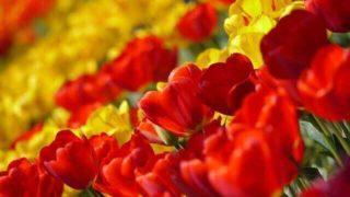 マヤ暦KIN145、赤い蛇・黄色い種・音2