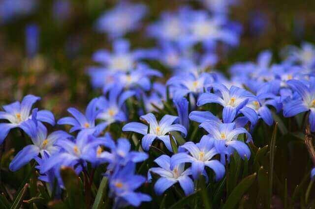 マヤ暦KIN147、青い手・黄色い種・音4