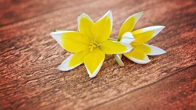 マヤ暦KIN148、黄色い星・黄色い種・音5