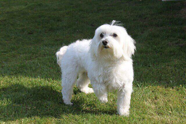 マヤ暦KIN150、白い犬・黄色い種・音7