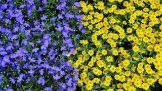 マヤ暦KIN151、青い猿・黄色い種・音8