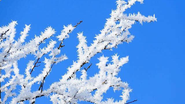 マヤ暦KIN179、青い嵐・白い犬・音10