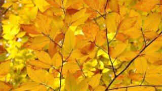マヤ暦KIN180、黄色い太陽・白い犬・音11