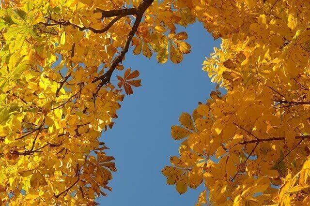 マヤ暦KIN184、黄色い種・青い夜・音2