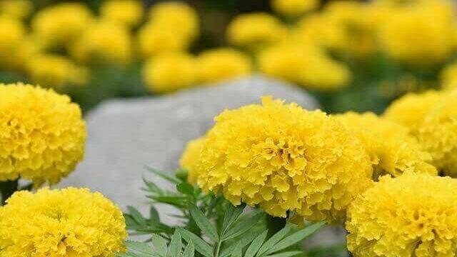 マヤ暦KIN200、黄色い太陽・黄色い戦士・音5