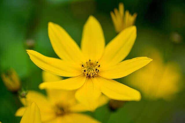 マヤ暦KIN204、黄色い種・黄色い戦士・音9