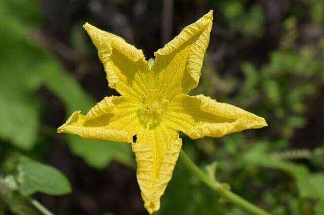 マヤ暦KIN208、黄色い星・黄色い戦士・音13
