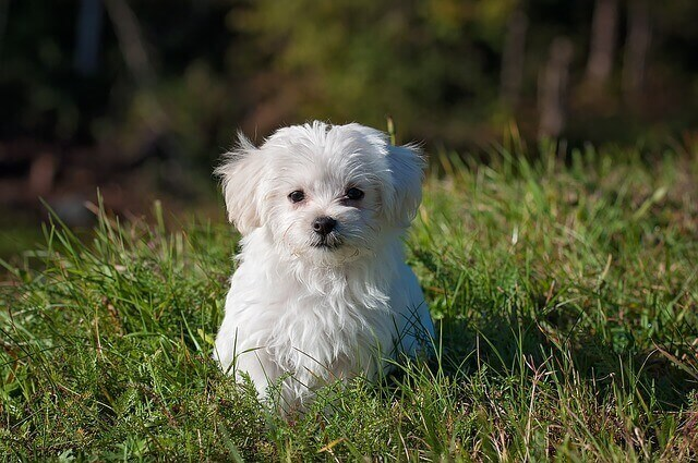マヤ暦KIN210、白い犬・赤い月・音2