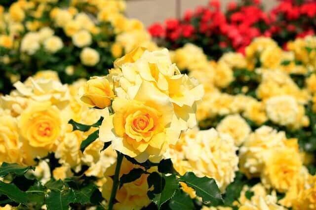 マヤ暦KIN212、黄色い人・赤い月・音4
