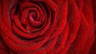 マヤ暦KIN221、赤い龍・赤い月・音13