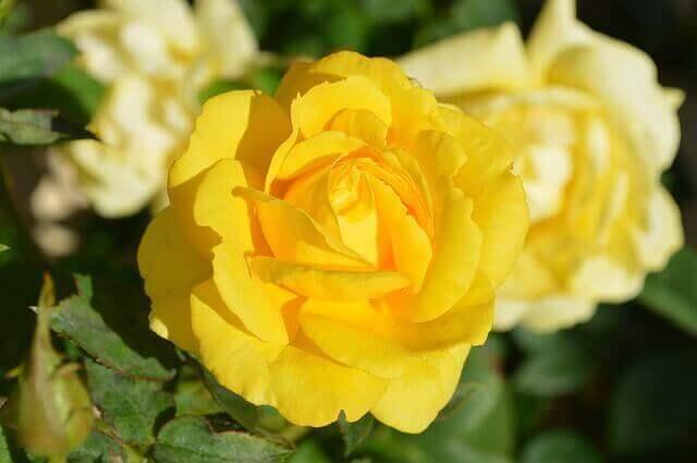 マヤ暦KIN228、黄色い星・白い風・音7