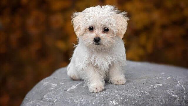 マヤ暦KIN230、白い犬・白い風・音9
