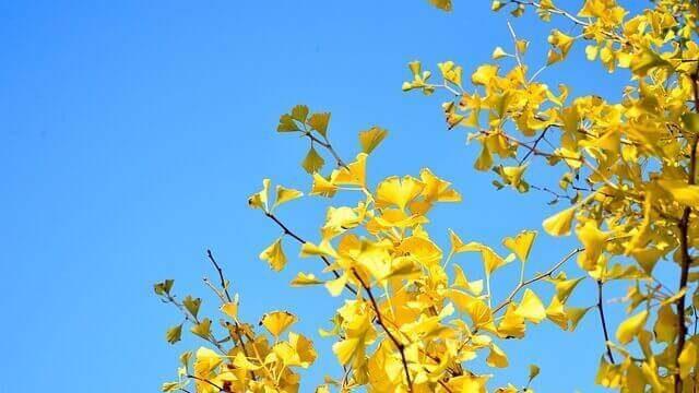 マヤ暦KIN240、黄色い太陽・青い鷲・音6