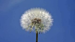 マヤ暦KIN242、白い風・青い鷲・音8