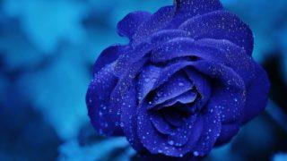 マヤ暦KIN247、青い手・青い鷲・音13