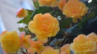 マヤ暦KIN248、黄色い星・黄色い星・音1