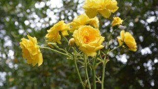 マヤ暦KIN252、黄色い人・黄色い星・音5