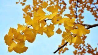 マヤ暦KIN256、黄色い戦士・黄色い星・音9