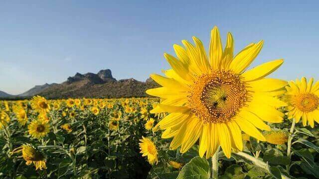 マヤ暦KIN260、黄色い太陽・黄色い星・音13