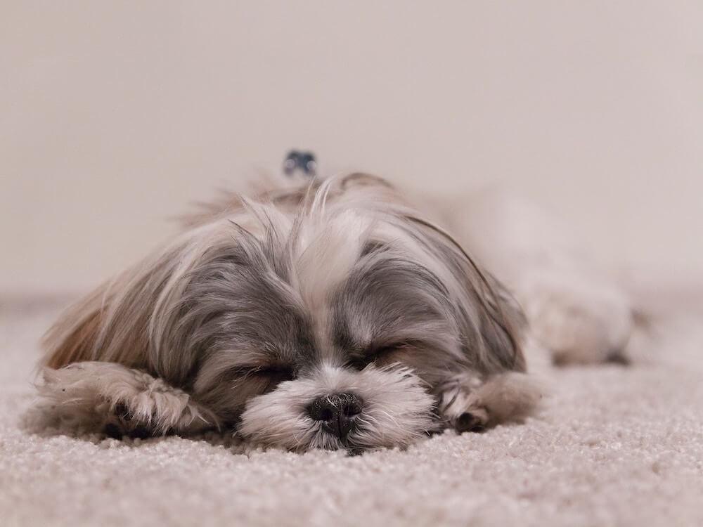 マヤ暦KIN170、白い犬・白い犬・音1
