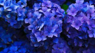 マヤ暦KIN183、青い夜・青い夜・音1